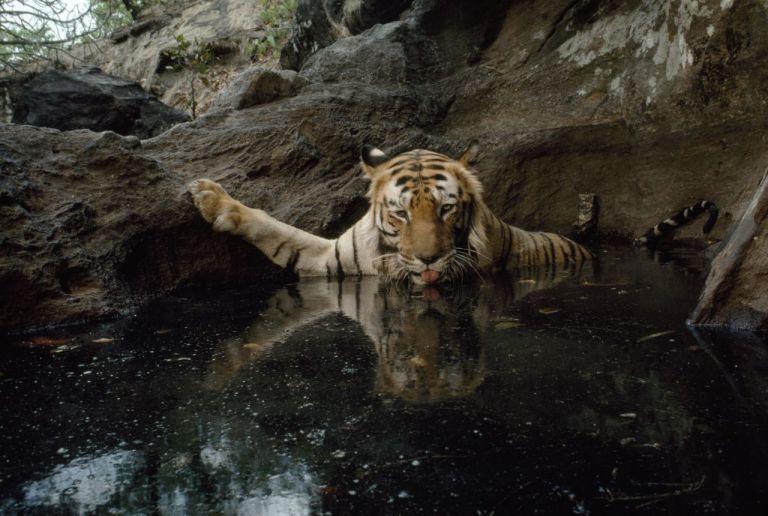 Tiger NatGeo 125