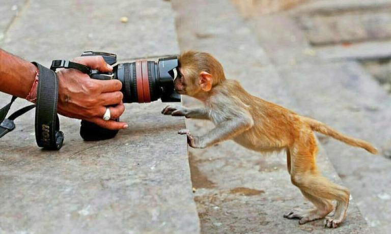 Monkey and lens